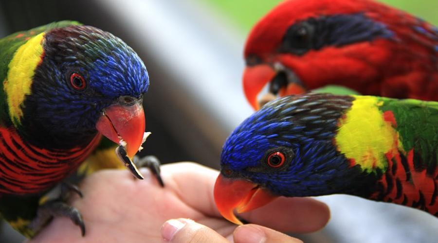 phuket_bird_park_007-1200-penang-bird-park_PPKK_Tours_Service