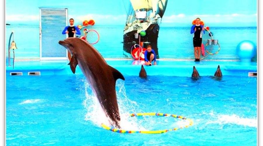 phuket_dolphins_show_002-phuket dolphins show_PPKK_Tours_Service