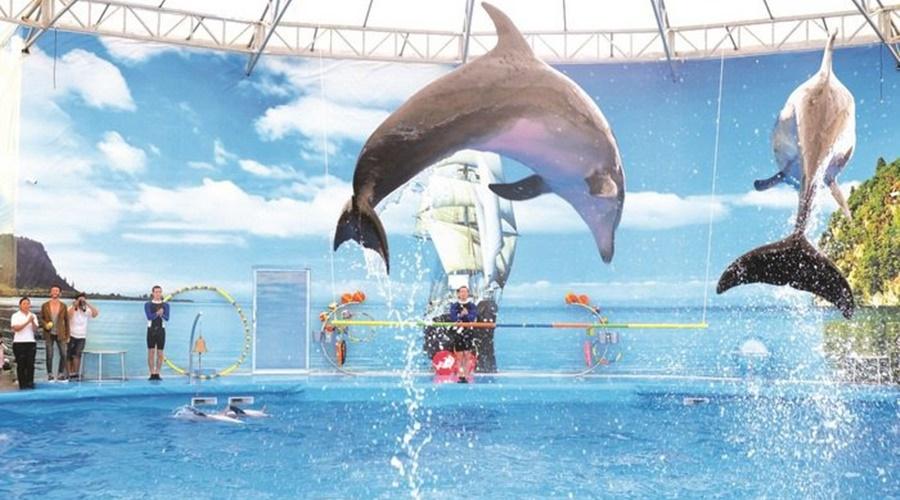 phuket_dolphins_show_003-1_201511611143984_jvcupaiFhbNXloRMMGIKZbCnxmcDmLYkKMOwgPTb_jpeg_PPKK_Tours_Service