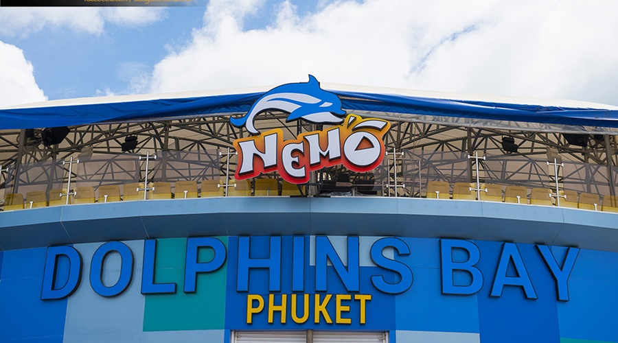 phuket_dolphins_show_005-0021_PPKK_Tours_Service
