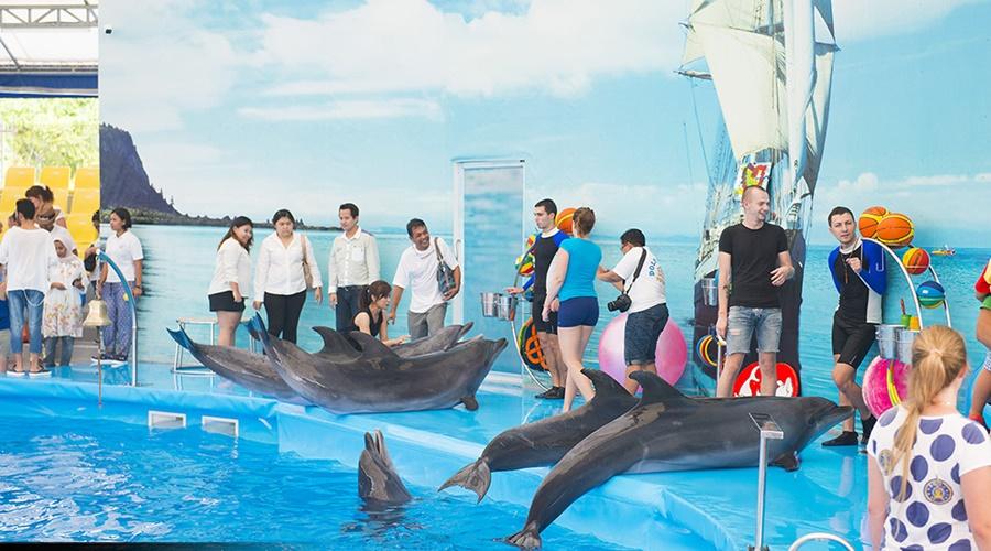 ผลการค้นหารูปภาพสำหรับ dolphin phuket