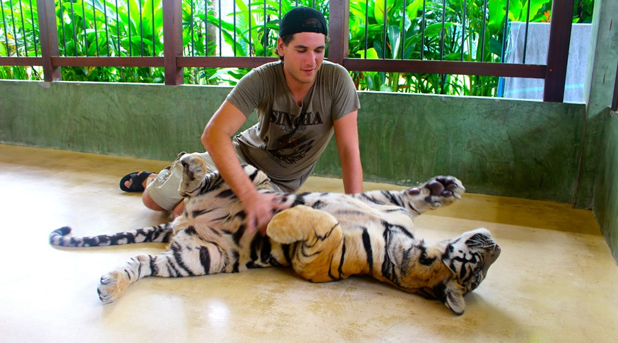 Phuket_Tiger_Kingdom_001-dd_PPKK_Tours_Service