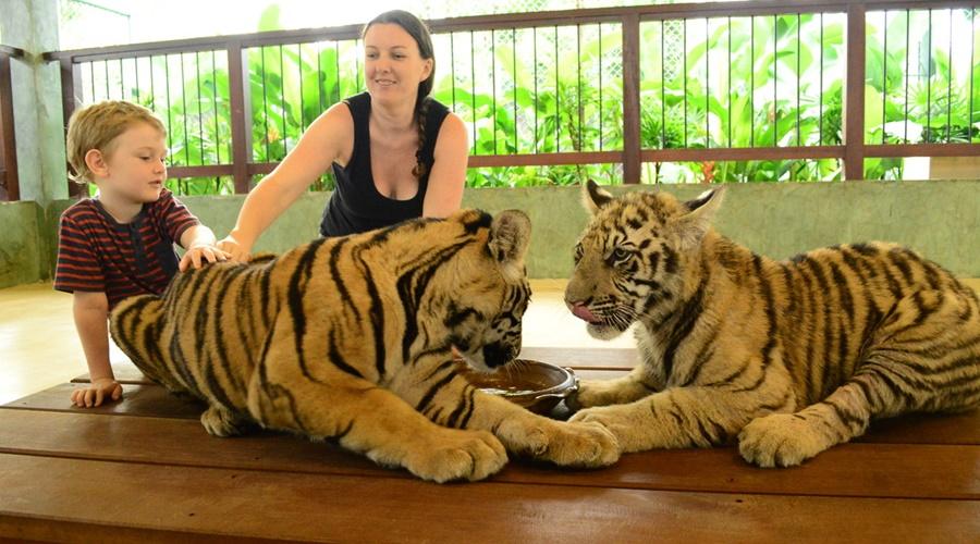 Phuket_Tiger_Kingdom_006-7255099_orig_PPKK_Tours_Service