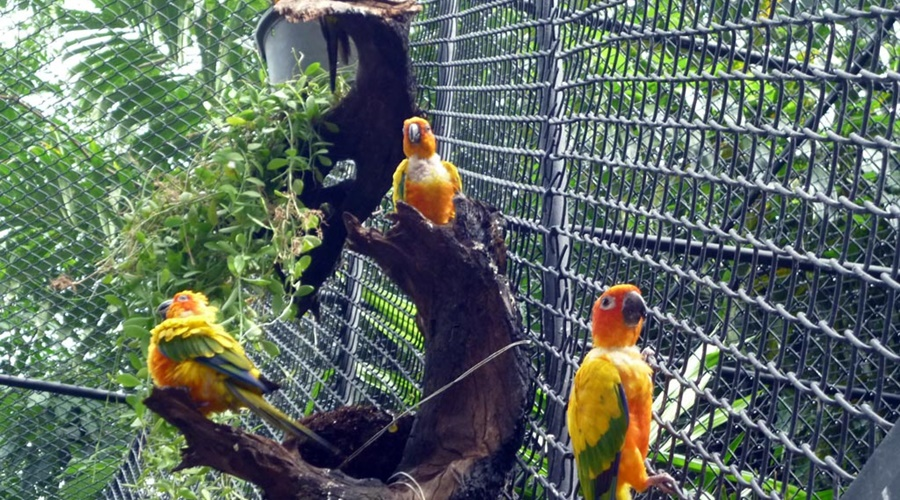 phuket_bird_park_003-full_attraction_bird_park_1_PPKK_Tours_Service