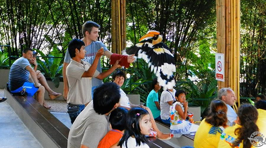 phuket_bird_park_005-phuket-bird-park.569_PPKK_Tours_Service
