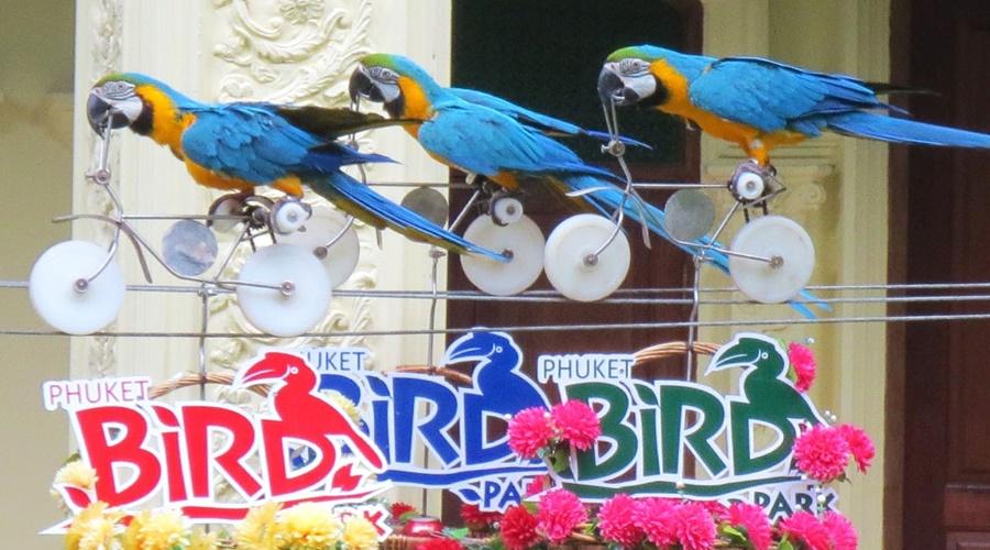 phuket_bird_park_006-phuket-bird-show_PPKK_Tours_Service